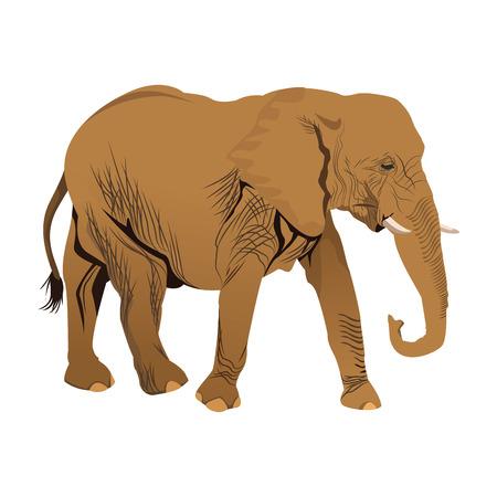 elephant wild animal safari african vector illustration