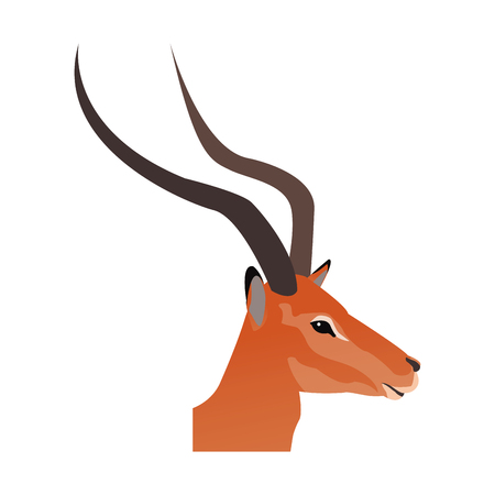 head impala africa mammal wild vector illustration