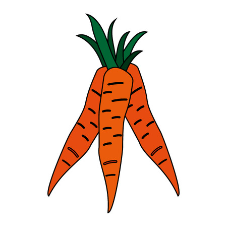 carrots vegetable icon image vector illustration design