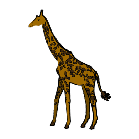 giraffe animal herbivore african wildlife vector illustration Illustration