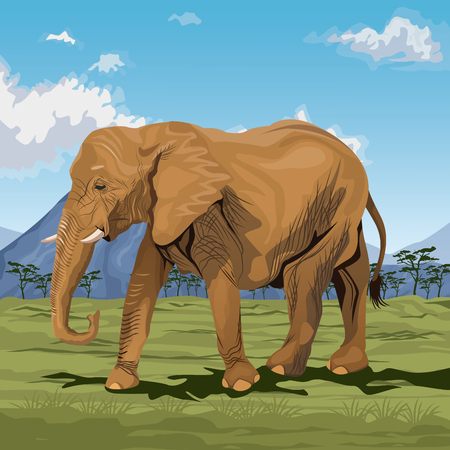 zoo dry: colorful scene african landscape with elephant walking vector illustration