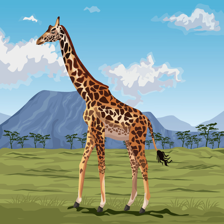 grasslands: colorful scene african landscape with giraffe standing vector illustration