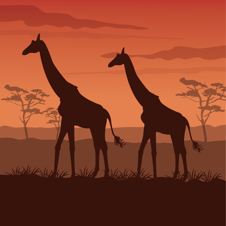 plant stand: color sunset scene african landscape with silhouette giraffes standing vector illustration Illustration