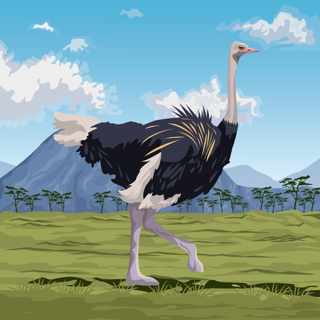 colorful scene african landscape with ostrich standing vector illustration