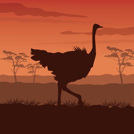 Scène coucher de soleil couleur paysage africain avec silhouette autruche debout illustration vectorielle Banque d'images - 82042724