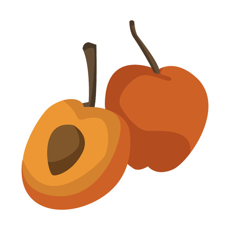apricot ripe juicy fruit with nut and leaf vector illustration