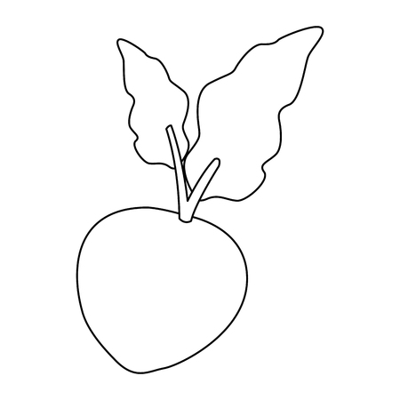 beet beetroot fresh raw ripe whole organic natural vegetable leaves vector illustration