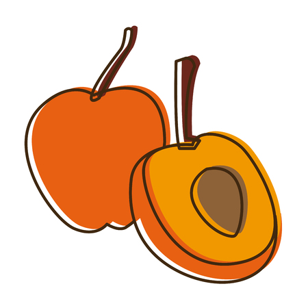 chunk: apricot ripe juicy fruit with nut and leaf vector illustration