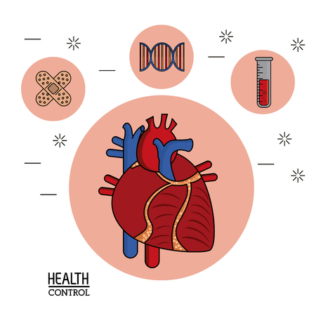 colorful Poster in white background with human heart system in closeup and silhouette icons of health control on top vector illustration Illustration