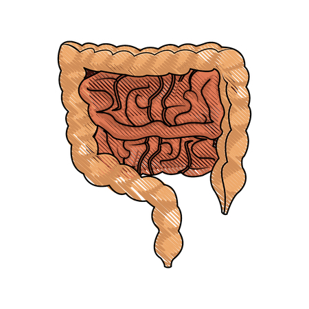 human man body anatomy intestines vector illustration