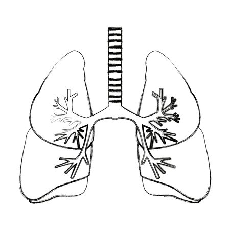 Human Lungs Anatomy Medical Science Internal Organ Trachea Vector