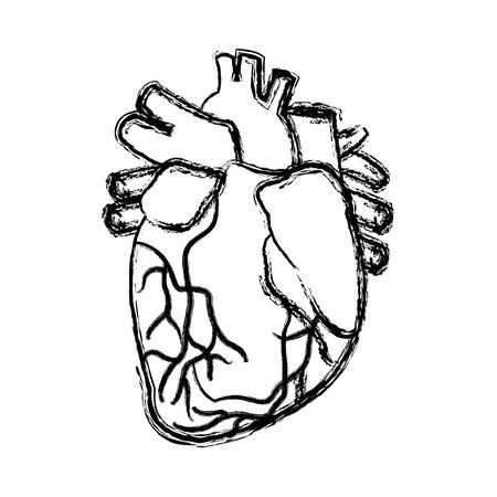 cutaway drawing: anatomy of the human heart medical vector illustration Illustration