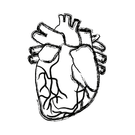anatomy of the human heart medical vector illustration Illustration