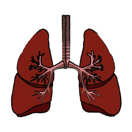 human lungs anatomy medical science internal organ trachea vector illustration Ilustracja