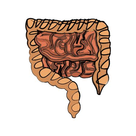 human man body anatomy intestines vector illustration