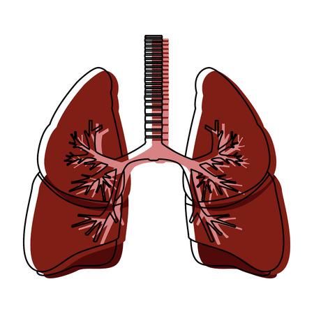 human lungs anatomy medical organ respiration vector illustration