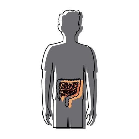 large intestine: human man body anatomy intestines medical image vector illustration