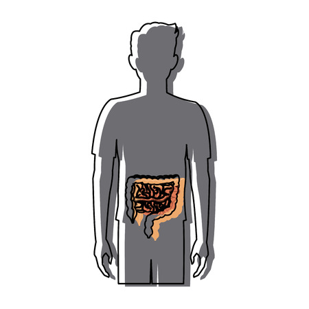 human man body anatomy intestines medical image vector illustration