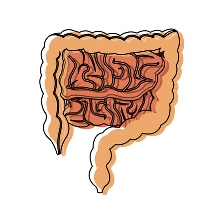 human intestines in digestive system health vector illustration Illustration