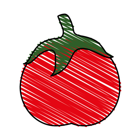 Colorful tomato doodle over white background vector illustration