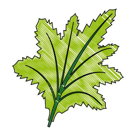 leaf nature plant foliage flora icon vector illustration Illustration