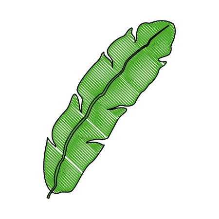 banaan verlof decoratieve tropische gebladerte pictogram vectorillustratie Stock Illustratie