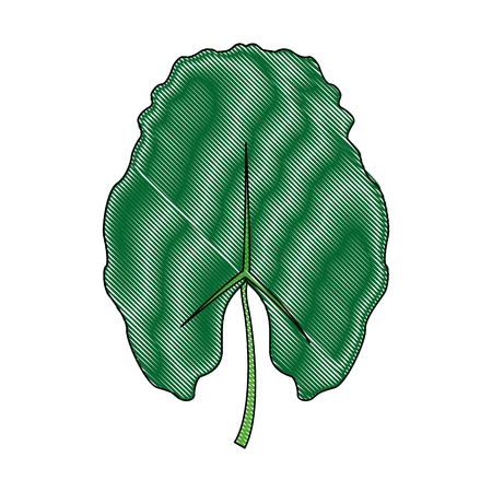 nature leave foliage botanical image isolated on white background vector illustration
