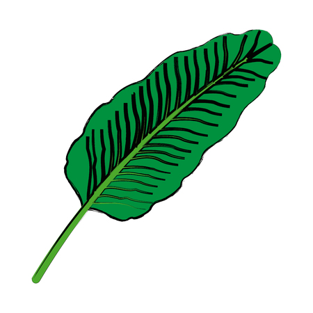 exotic tropical leave botanical flora icon vector illustration