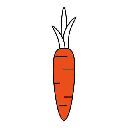 hint: Flat line carrot with hint of color over white background vector illustration