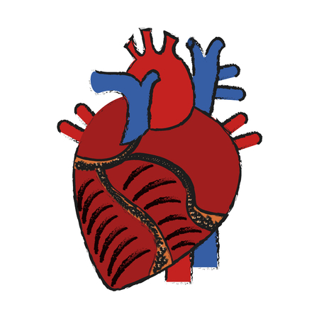 Colorful anatomic heart doodle over white background vector illustration
