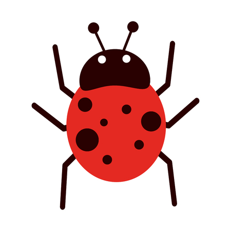 ladybug insect icon image vector illustration design