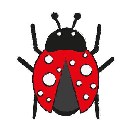 antennae: ladybug insect icon image vector illustration design