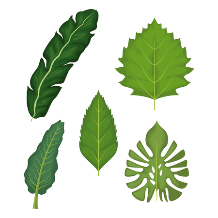 white background with set of green leaves vector illustration Illustration