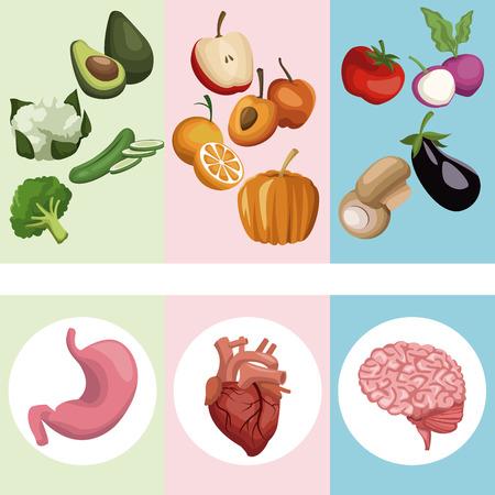 Kleur banner poster groenten en fruit met organen menselijk lichaam vector illustratie