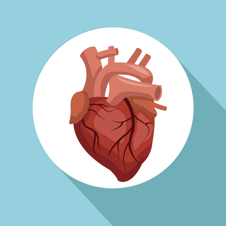 Color background with circular frame heart organ human body vector illustration