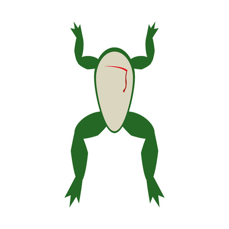 frog dissection science related icon image vector illustration design