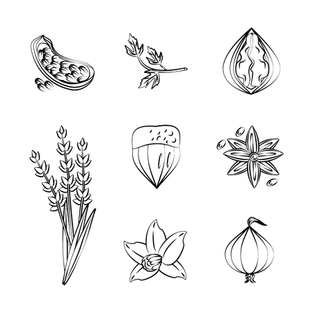 Herbs and spices icons over white background vector illustration graphic design Illustration