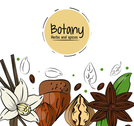 Botany herbs and spices over white background vector illustration graphic design