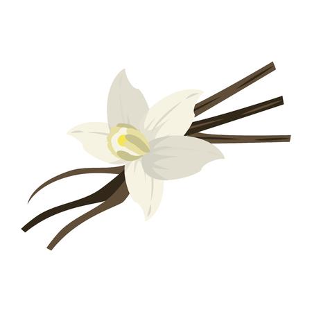 vanilla flower and pods icon image vector illustration design Illustration