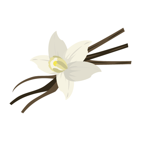 vanilla flower and pods icon image vector illustration design Ilustrace
