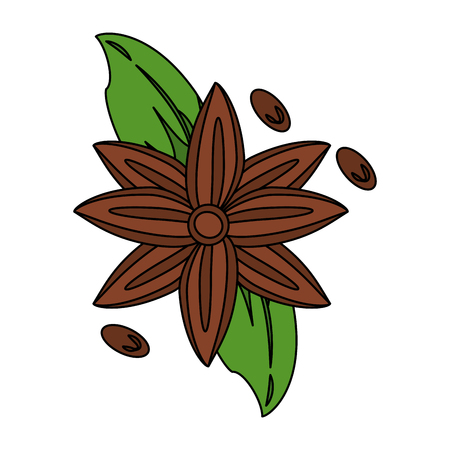 anise star seed icon image vector illustration design