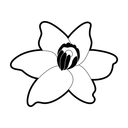 vanilla flower icon image vector illustration design  black and white