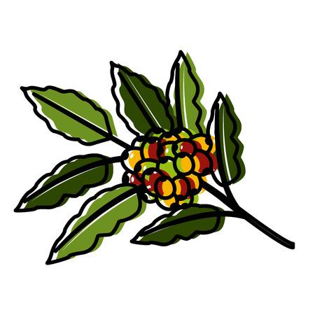 branch coffee leaf icon vector illustration design