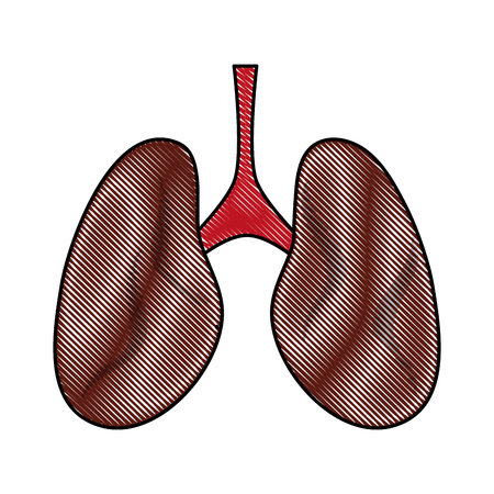 lungs anatomy icon image vector illustration design