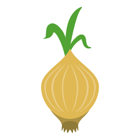 onion vegetable icon image vector illustration design Illustration