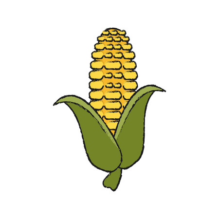 corn knob vegetable icon image vector illustration design Illustration