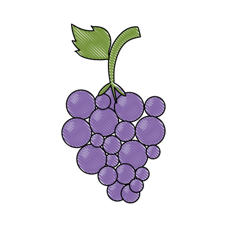 Grapes fruit isolated icon vector illustration graphic design.