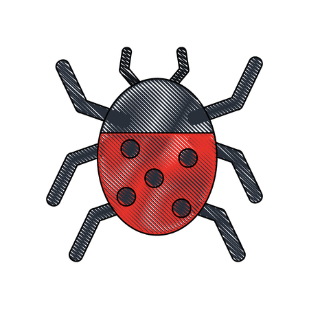 ladybug beetle insect or bug icon image vector illustration design