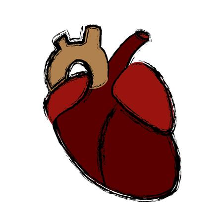Human heart symbol icon vector illustration graphic design Illustration