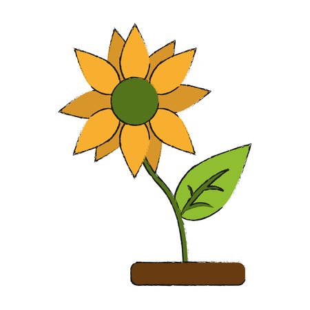 Sunflower beautiful flower icon vector illustration graphc design Illustration